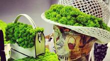 Salone Del Mobile 2016. Основная тенденция: мох для декора (Фото).