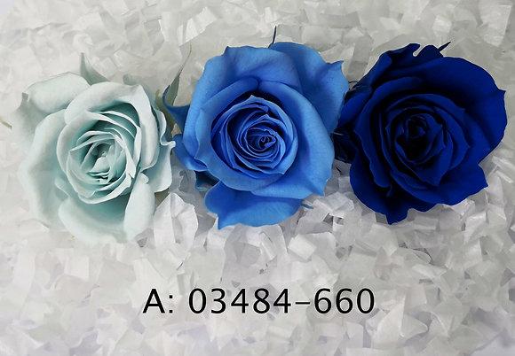 """Роза """"Izumi Color"""", А: 660"""