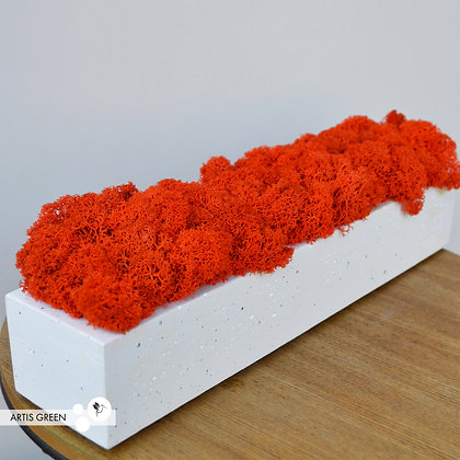 Бетонное кашпо со скандинавским мхом, оранжевый