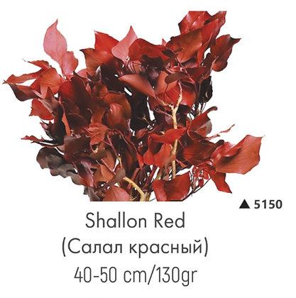 Салал красный