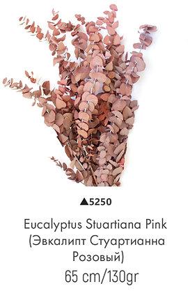 Эвкалипт стуартианна розовый