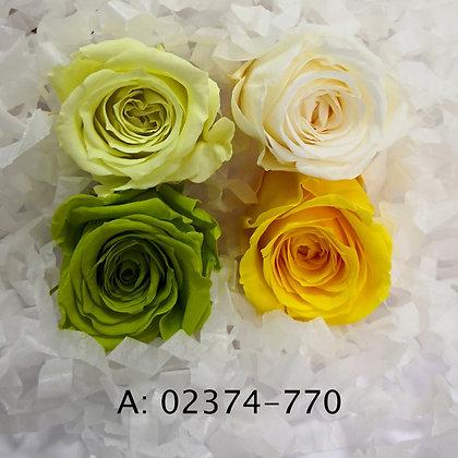 "Роза ""Vivian Color"", А: 770"