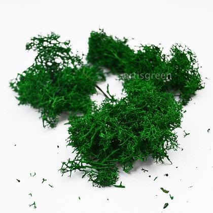 Стабилизированный мох Ягель без верхушек для декора, зелёный 100 грамм