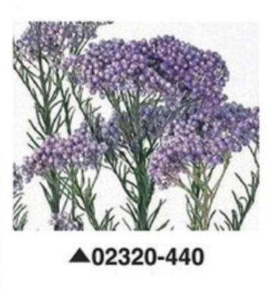 Диосми фиолетовая, А: 440