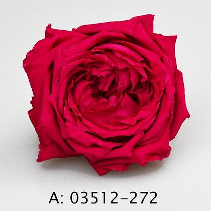 Роза Джульетта (Juliet), А: 272 , 6 бутонов