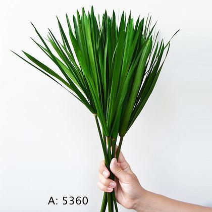 Папирус на стебле