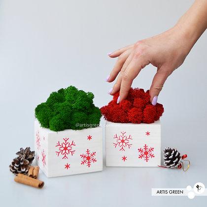 Горшочек с красным мхом. Новогодний корпоративный подарок