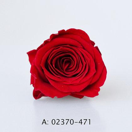 "Роза ""Vivian"", А: 471"