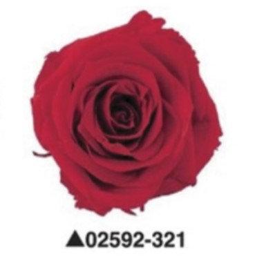 """Роза """"Charlotte"""", А: 321"""