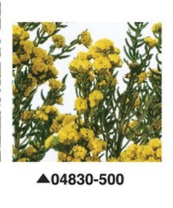 Филика желтая, А: 500