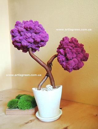 Tree Fuxia