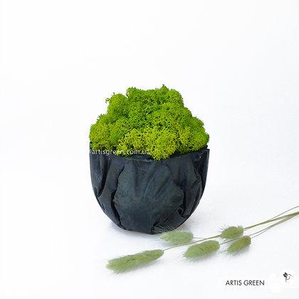 Бетонное черное кашпо со скандинавским мхом, вассаби