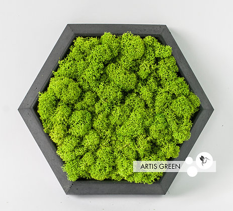 Гипсовая плитка-сота со мхом Black Hexagon
