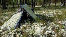 Почему стабилизированный мох от «Artis Green» так долго сохраняет естественный вид, текстуру и форму