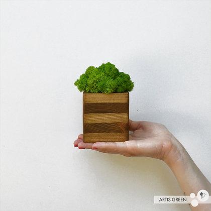 Striped Wood. Натуральное дерево со мхом