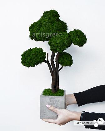 Бонсай со скандинавским мхом, дерево 40 cm