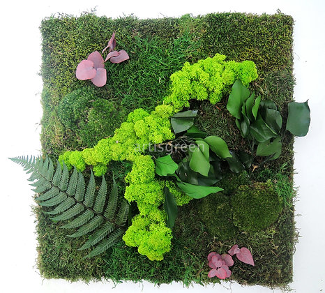 Картина из стабилизированных растений и мха 50х50 см