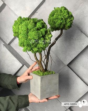 Дерево из зеленого мха. Топиарий из мха. Трехствольный бонсай из мха