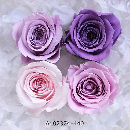 "Роза ""Vivian Color"", А: 440"