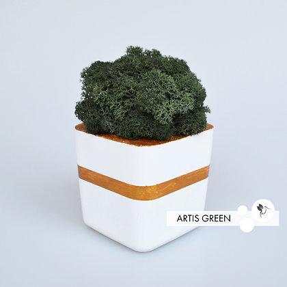 Композиция  «White&Green»