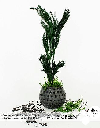 Мини-дерево со стабилизированным растением «Elegance Dark»