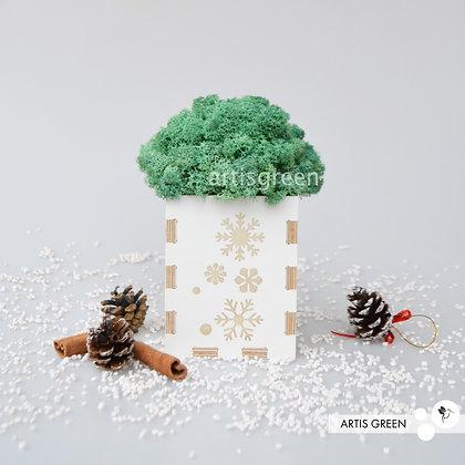 Бирюзовый мох в кашпо. Новогодний корпоративный подарок. Мох в кубе.