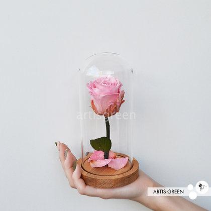 Розовая роза со стеблем в колбе, стабилизированная