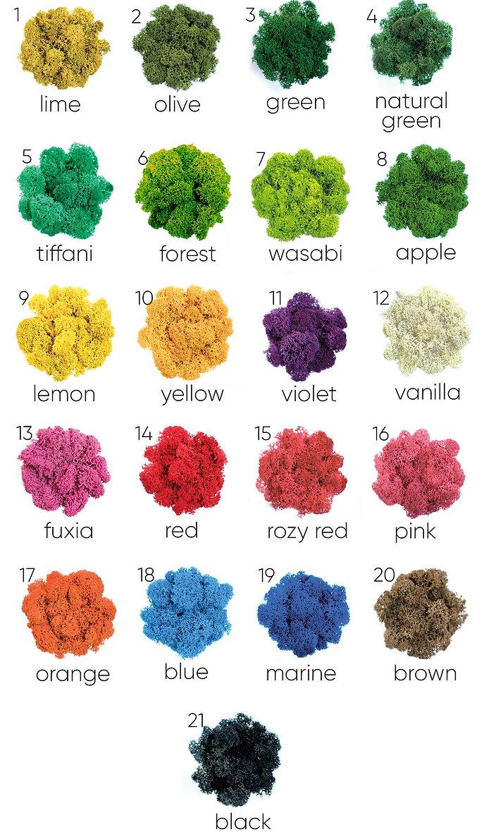 Стабилизированный мох цвета