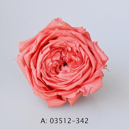Роза Джульетта (Juliet), А: 342 , 6 бутонов