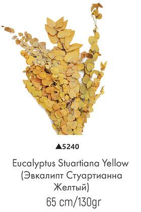 Эвкалипт стуартианна желтый