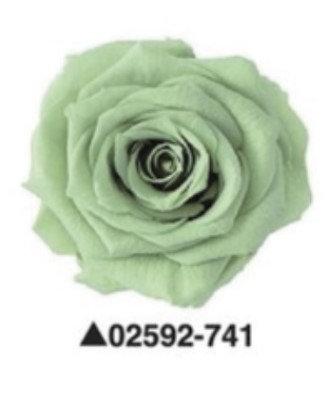 """Роза """"Charlotte"""", А: 741"""