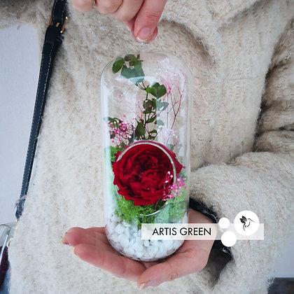 Роза в колбе «Red&Green»