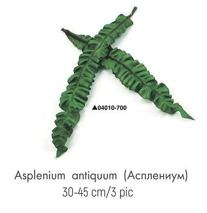 Асплениум
