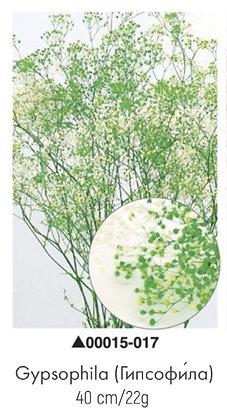 Гипсофила зеленая, А: 017