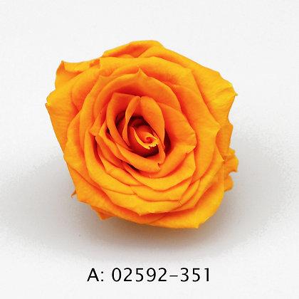 """Роза """"Charlotte"""", А: 351"""