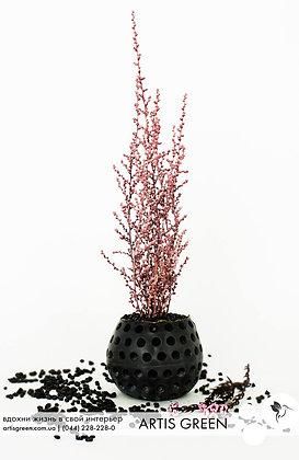 """Мини-дерево со стабилизированным растением """"Elegance Pink"""""""