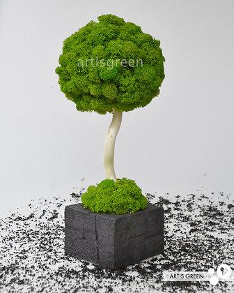 Дерево из мха, топиарий Fresh Black