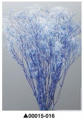Гипсофила синяя