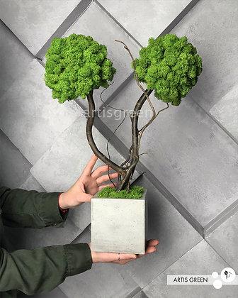 Двуствольное дерево со скандинавским мхом, топиарий 50 cm