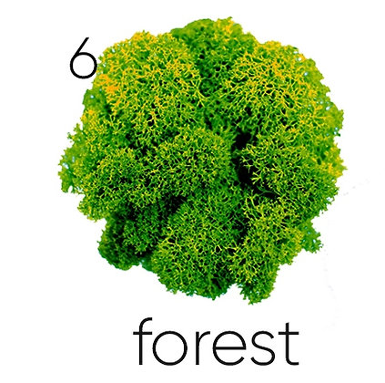 06 FOREST, 250 гр