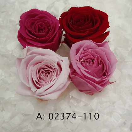 "Роза ""Vivian Color"", А:110"