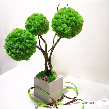Трехствольное дерево из мха, топиарий wasabi