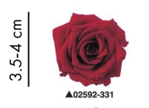 """Роза """"Charlotte"""", А: 331"""