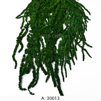 Амарант зелёный