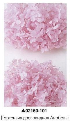 Гортензия розовая, А: 101