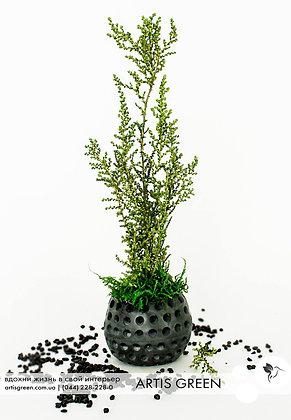 """Мини-дерево со стабилизированным растением """"Elegance Green"""""""