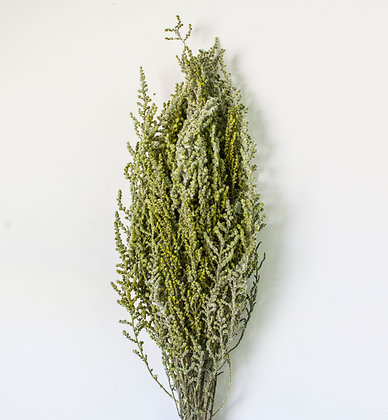 Грабия зеленая