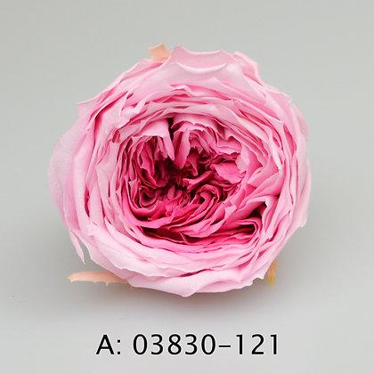 Роза Темари, А: 121, 8 бутонов
