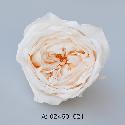 """Роза """"Темри"""", 021, 8 бутонов"""