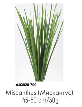 Мискантус